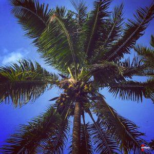 D. G. Calabrò: «Quando sono arrivata a Suva, la prima cosa che ho fatto dopo l'agognata doccia è stata contemplare il cielo blu attraverso le palme da cocco. Ho sorriso pensando che all'incirca per i prossimi dieci mesi quella prospettiva sarebbe stata casa».