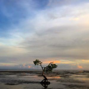 D. G. Calabrò: «Al decimo chilometro della mia prima corsa alle Fiji. Il tasso di umidità mi consuma, ma il paesaggio mi conforta. E riesco a percorrere i due chilometri che mi separano da casa».